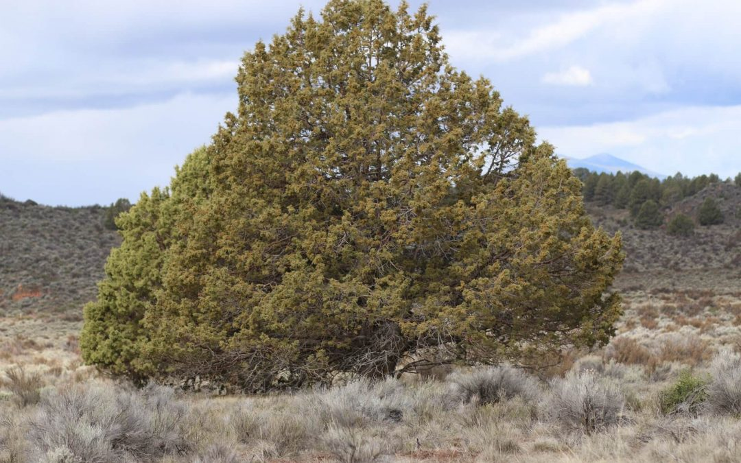 3 Acres near Beatty, Klamath County, OR