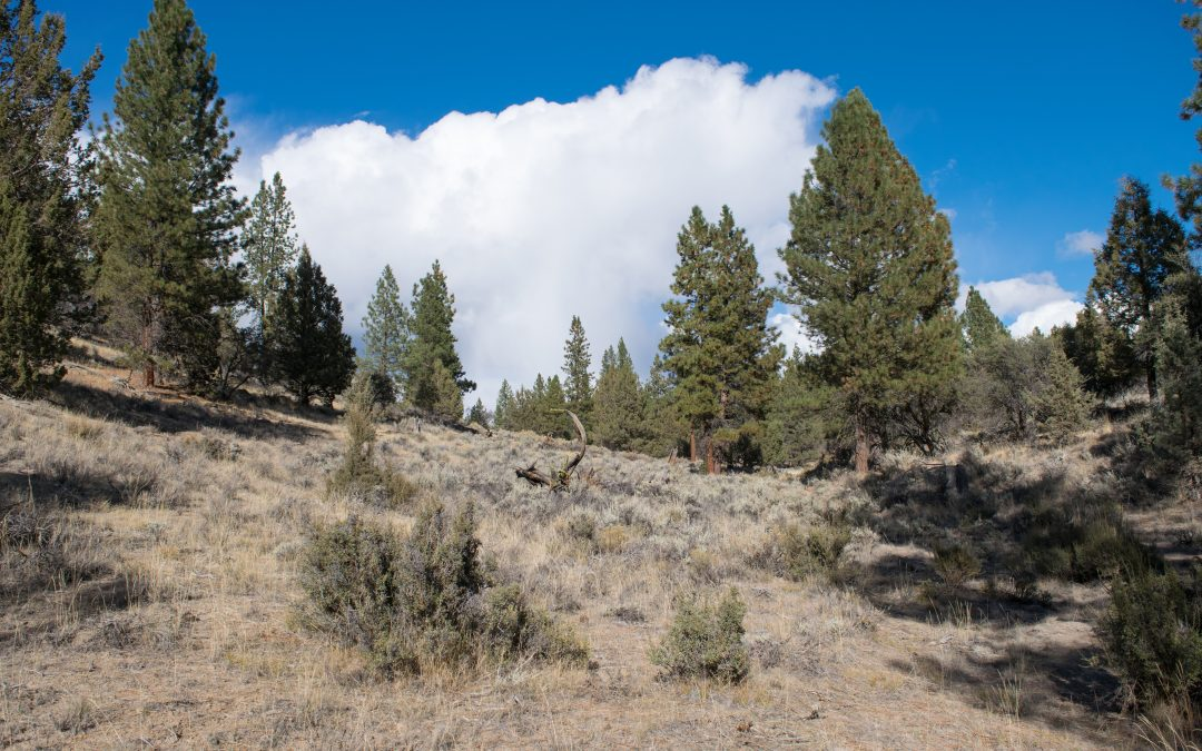 Wooded and Private, in Klamath County, OR
